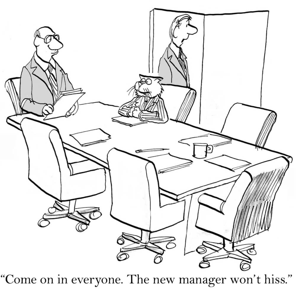 "A new manager in the form of a cat is sitting at the board desk white a man stands at the door inviting the team in saying, ""The new manager won't hiss"" illustrating how hard it can be to succeed as a new manager"
